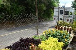 Altos de Campana, Panama, Central America, Chica, Campana, flowers, nature, ohlavan, explore, adventure