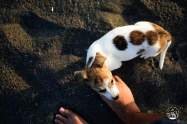 La Ticla, surfing, Michoacán, México, roadtrip, adventure, Ohlavan, overlanding, puppy, cachorro, adoption, adopción, rescued