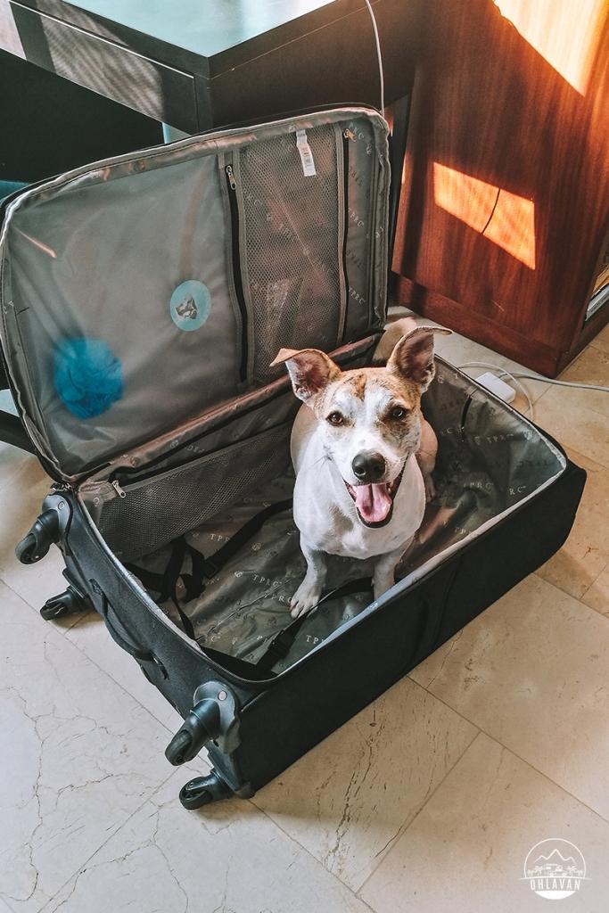 Cómo cruzar de República Dominicana a Haití con tu perro